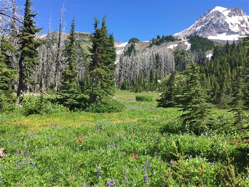 Meadow on Mount Hood
